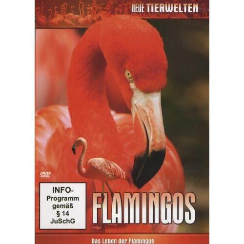 Various - Flamingos - Das Leben der Flamingos - Preis vom 23.09.2021 04:56:55 h