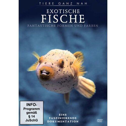 - Exotische Fische - Preis vom 16.05.2021 04:43:40 h