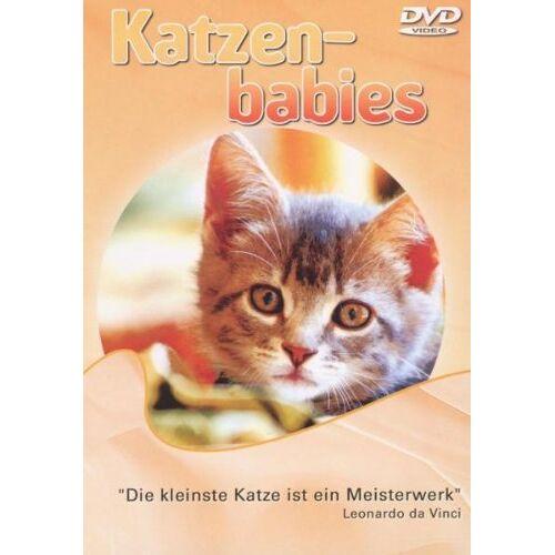 - Katzenbabies - Preis vom 13.06.2021 04:45:58 h