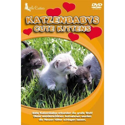 - Little Cuties - Katzenbabys - Preis vom 15.04.2021 04:51:42 h