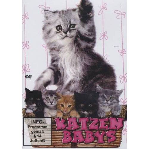 Various - Katzenbabys - Preis vom 19.10.2020 04:51:53 h