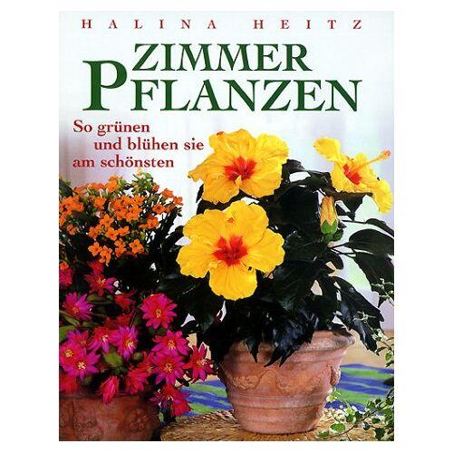 - Zimmerpflanzen - Preis vom 17.05.2021 04:44:08 h