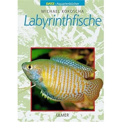 Michael Kokoscha - Labyrinthfische - Preis vom 23.02.2021 06:05:19 h