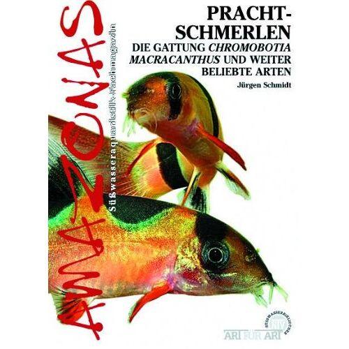 Jürgen Schmidt - Prachtschmerlen: Chromobotia macracanthus und weitere beliebte Arten - Preis vom 21.10.2020 04:49:09 h