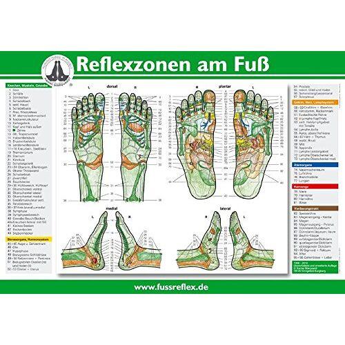 Hanne Marquardt - Reflexzonen der Fe (Tafel A2) - Preis vom 22.01.2020 06:01:29 h