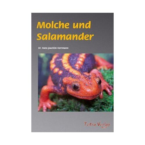 Hans-Joachim Herrmann - Molche und Salamander - Preis vom 15.04.2021 04:51:42 h