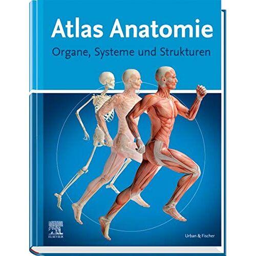 - Atlas Anatomie für Laien - Preis vom 25.01.2020 05:58:48 h