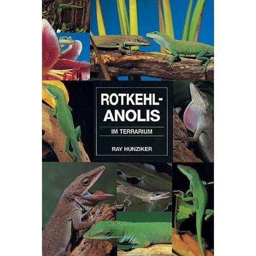 Ray Hunziker - Rotkehlanolis im Terrarium - Preis vom 20.10.2020 04:55:35 h