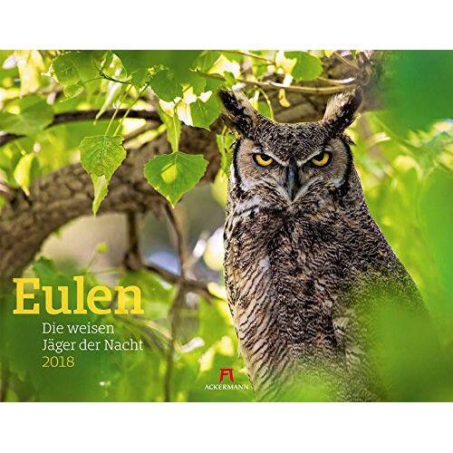 Ackermann Kunstverlag - Eulen 2018 - Preis vom 23.01.2020 06:02:57 h