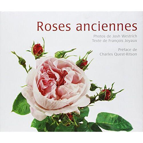 François Joyaux - Roses anciennes - Preis vom 18.04.2021 04:52:10 h