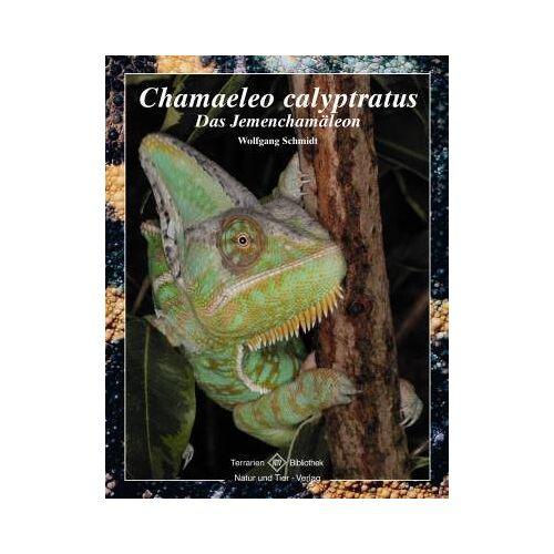 Wolfgang Schmidt - Chamaeleo calyptratus: Das Jemenchamäleon - Preis vom 01.03.2021 06:00:22 h