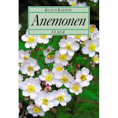 Kaiser Anemonen - Preis vom 05.09.2020 04:49:05 h
