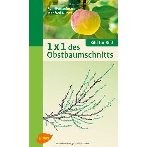 Rolf Heinzelmann - 1 x 1 des Obstbaumschnitts: Bild für Bild - Preis vom 20.10.2020 04:55:35 h