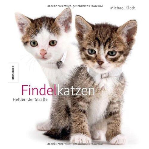Michael Kloth - Findelkatzen: Helden der Straße. Ein Katzen - Buch - Preis vom 06.09.2020 04:54:28 h