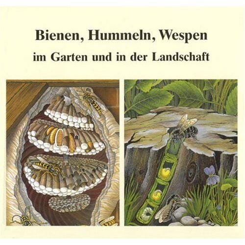 Helmut Hintermeier - Bienen, Hummeln, Wespen im Garten und in der Landschaft. Honigbienen, Hummeln, Solitärbienen, Wespen und Hornissen - Preis vom 18.04.2021 04:52:10 h