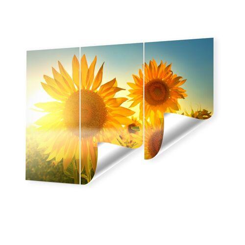 myposter Sonnenblumen Bild Fototapeten im Format 240 x 160 cm