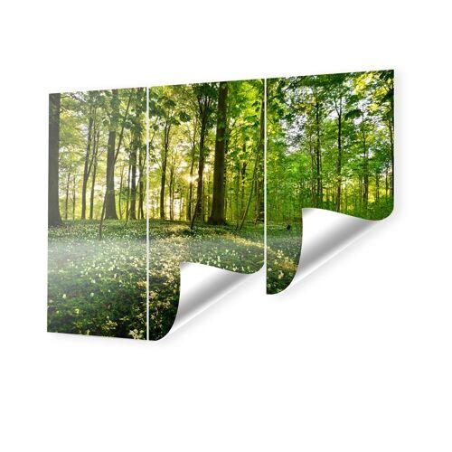 myposter Waldbilder Fototapete im Format 160 x 120 cm
