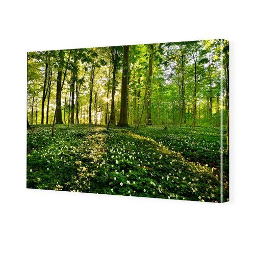 myposter Waldbilder Foto auf Leinwand im Format 80 x 60 cm