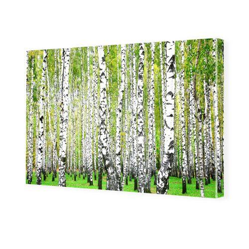 myposter Birkenbilder Bilder auf Leinwand im Format 120 x 80 cm