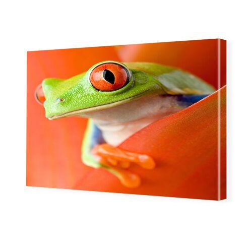 myposter Frosch Poster Foto auf Leinwand im Format 80 x 60 cm