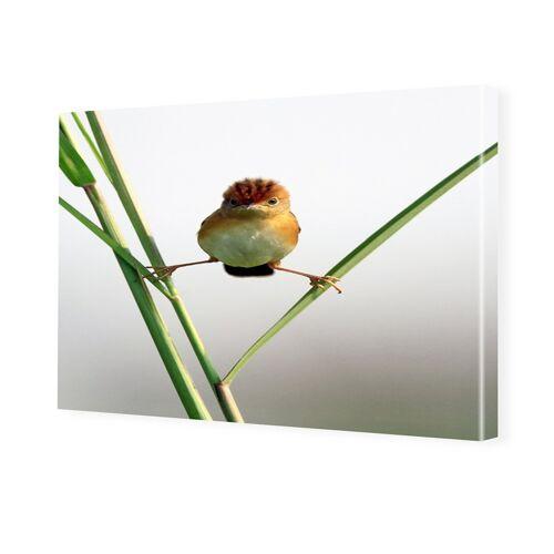 myposter Lustige Vogelbilder Fotoleinwand im Format 90 x 60 cm