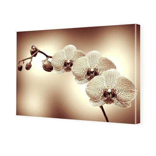 myposter Orchidee auf Leinwand Bilder auf Leinwand im Format 120 x 80 cm