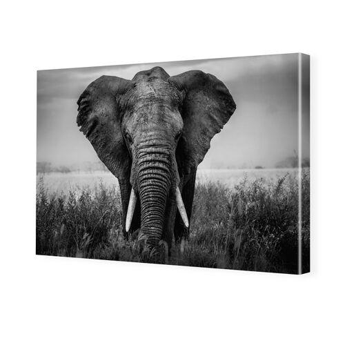 myposter Elefant Portrait schwarz weiß Bilder Foto auf Leinwand im Format 80 x 60 cm