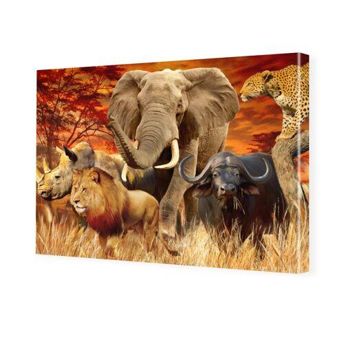 myposter Big Five Poster Foto auf Leinwand im Format 80 x 60 cm