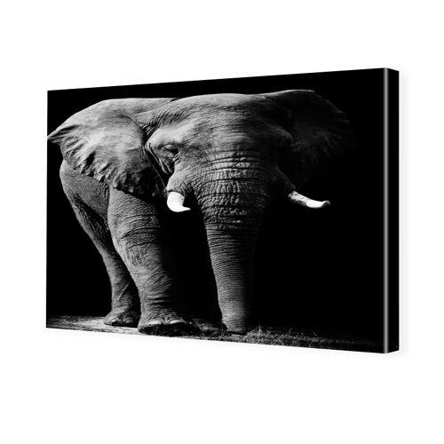 myposter Elefantenbild Bilder auf Leinwand im Format 180 x 120 cm