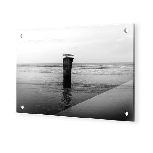 myposter Bilder Möwe Glasbilder im Format 60 x 40 cm