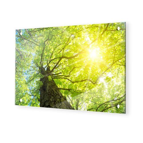 myposter Baum Sonnenstrahlen Plexiglas Bild im Format 160 x 90 cm