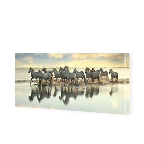 myposter Pferde Foto Leinwandbild als Panorama im Format 120 x 60 cm