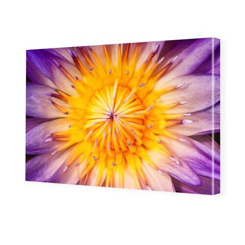 myposter Lotusbluete Fotoleinwand im Format 75 x 50 cm