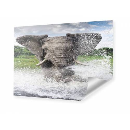 myposter Elefant Foto Poster im Format 60 x 45 cm