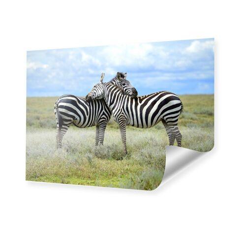 myposter Zebras Foto Poster im Format 70 x 50 cm