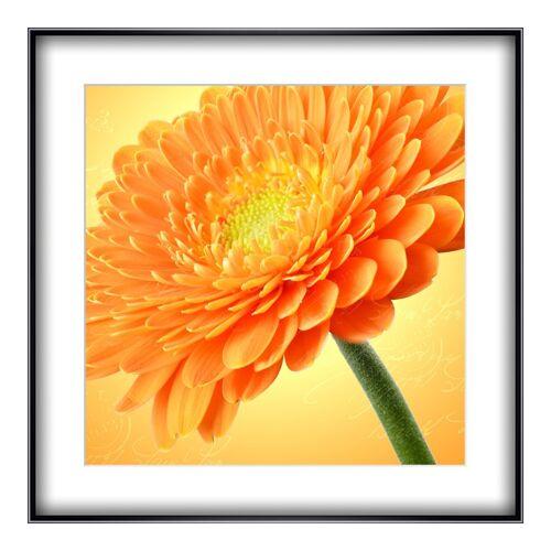 myposter Flower Power Poster im Rahmen Alu rund in schwarz im Format 75 x 50 cm