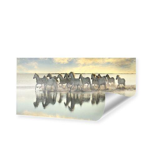 myposter Pferde Foto Poster als Panorama im Format 270 x 135 cm