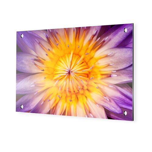 myposter Lotusbluete Alu Dibond im Format 150 x 100 cm