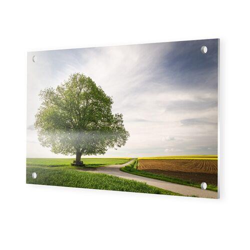 myposter Linde im Fruehling Foto auf Forex im Format 105 x 70 cm