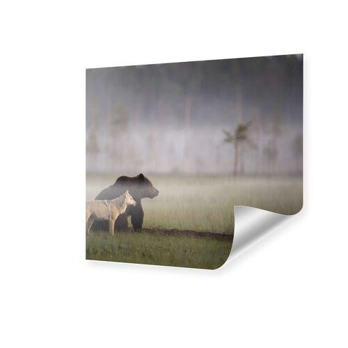 myposter Bild Bär und Wolf Poster quadratisch im Format 30 x 30 cm