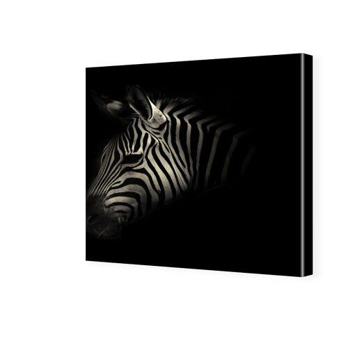 myposter Zebra Portrait Fotos auf Leinwand quadratisch im Format 80 x 80 cm