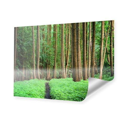myposter Wald Poster Poster im Format 40 x 30 cm