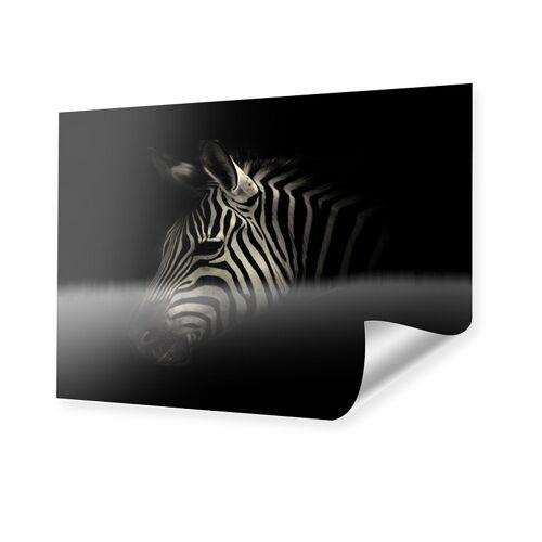 myposter Zebra Portrait Poster im Format 80 x 60 cm