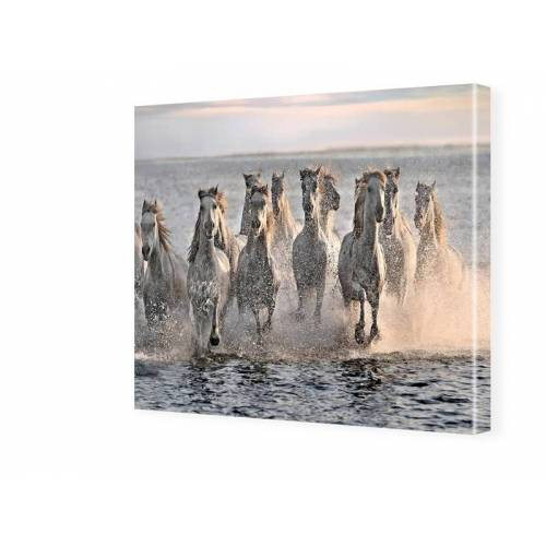 myposter Pferde Foto Fotos auf Leinwand quadratisch im Format 60 x 60 cm