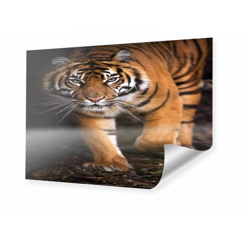 myposter Tiger Poster Poster im Format 80 x 60 cm