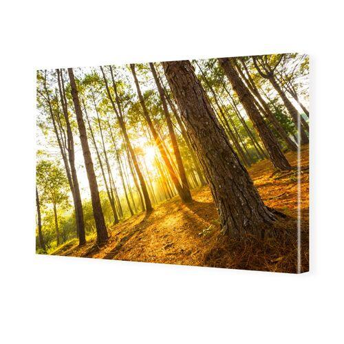 myposter Waldbild Bilder auf Leinwand im Format 150 x 100 cm