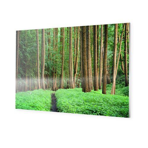myposter Wald Poster Photo auf Forex im Format 128 x 72 cm