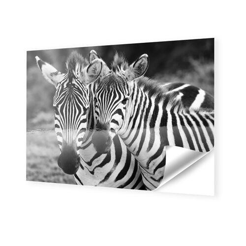 myposter Zebras Motiv Foto auf Klebefolie im Format 168 x 120 cm