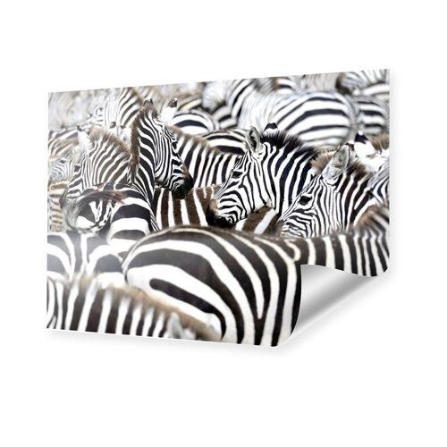 myposter Zebras Bild Poster im Format 80 x 60 cm