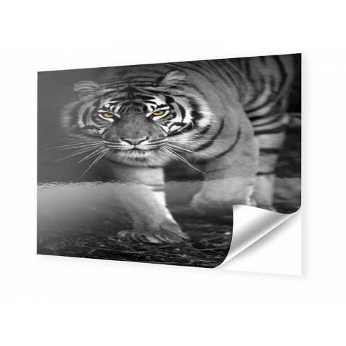 myposter Tiger Poster Fotos auf Folie im Format 75 x 50 cm